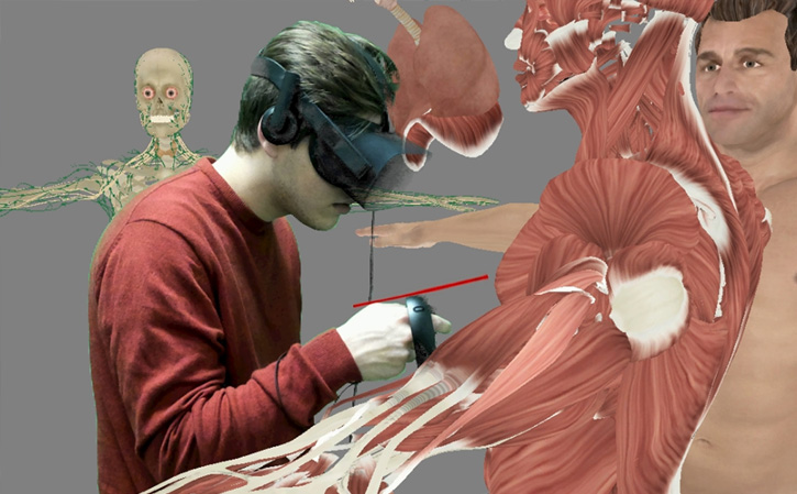 muscle tissue dissection in VR
